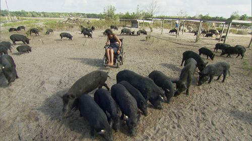 Pig515